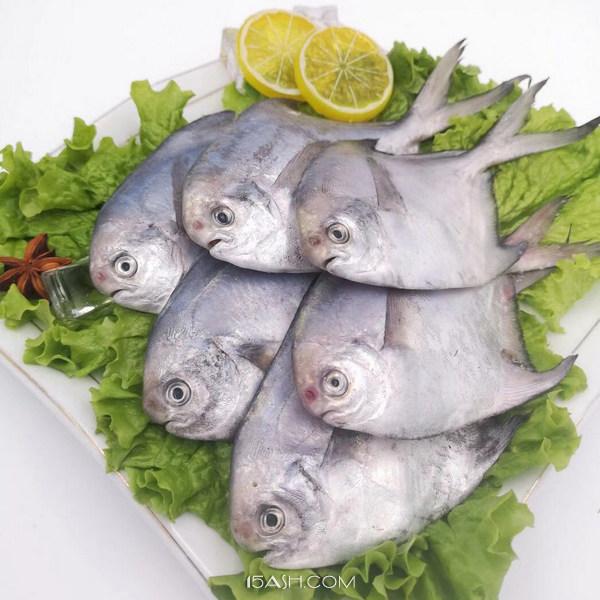 4斤野生银鲳鱼28条